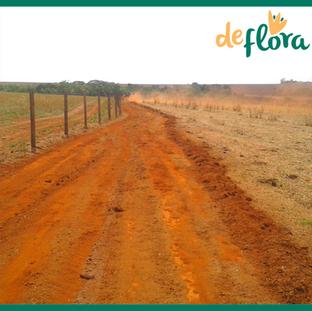 Deflora Reflorestamento (8).png