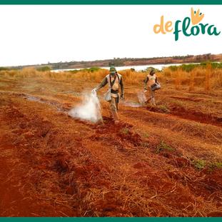 Deflora Reflorestamento (16).png