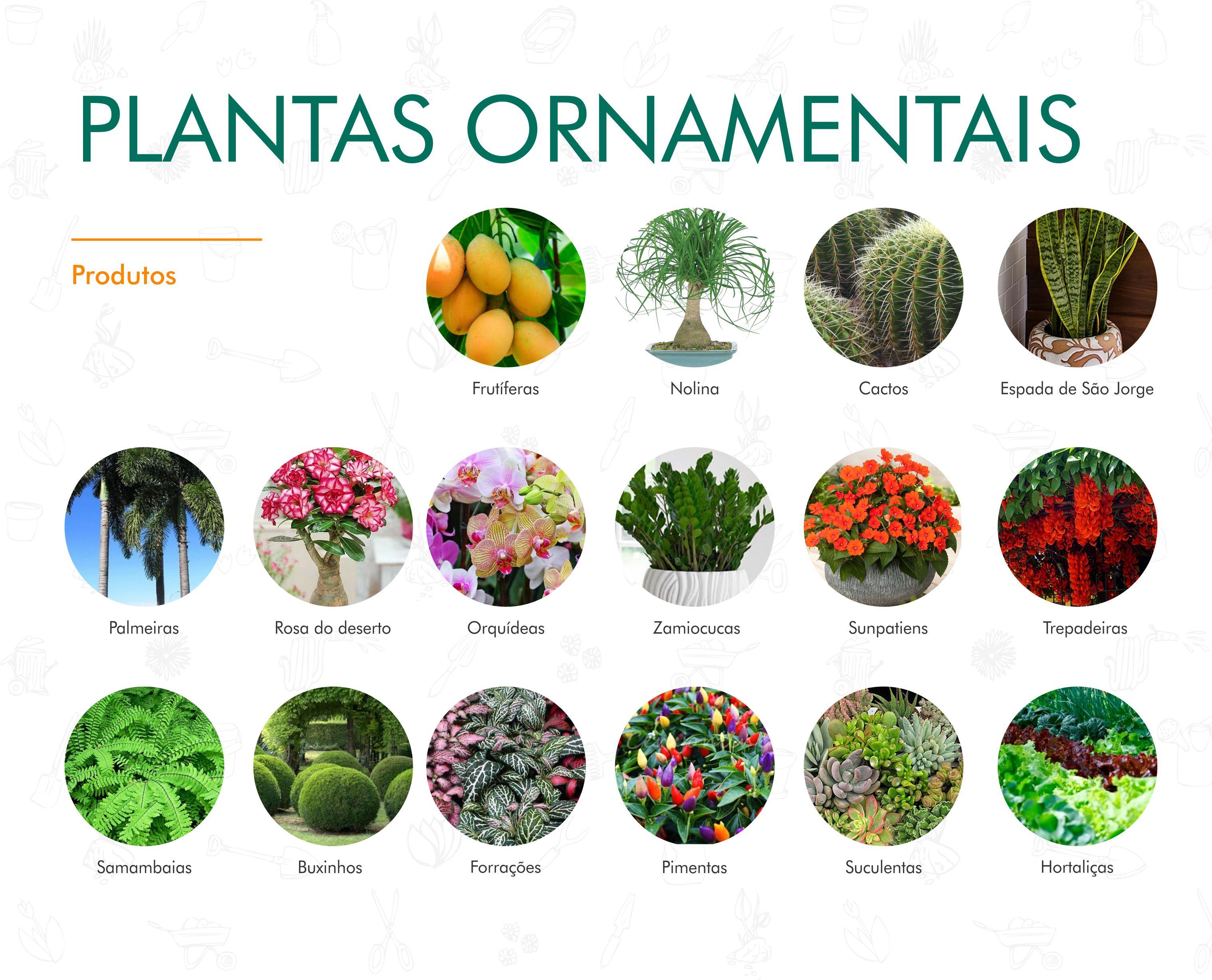 Portifólio - Plantas Ornamentais