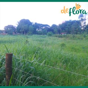 Deflora Reflorestamento (26).png