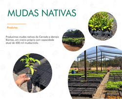 Portifólio - Mudas Nativas