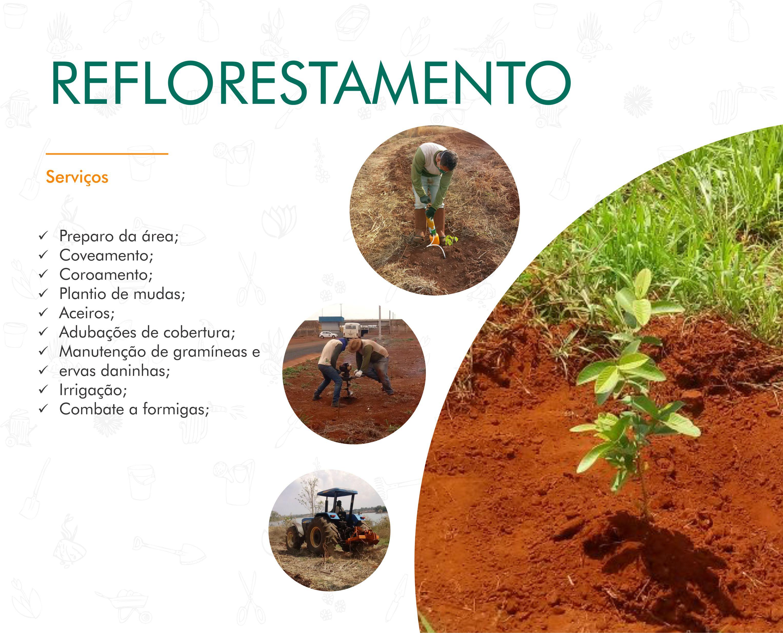 Portifólio - Reflorestamento