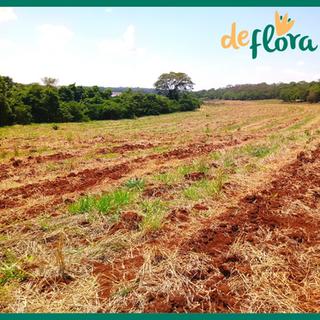Deflora Reflorestamento (01).png