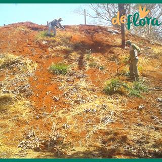 Deflora Reflorestamento (23).png