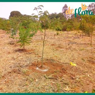Deflora Reflorestamento (35).png