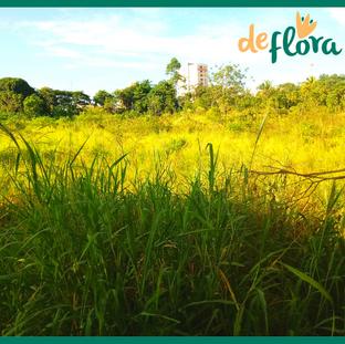 Deflora Reflorestamento (31).png
