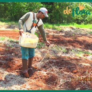 Deflora Reflorestamento (17).png