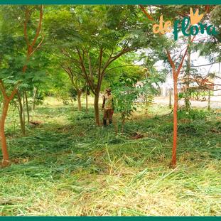 Deflora Reflorestamento (36).png