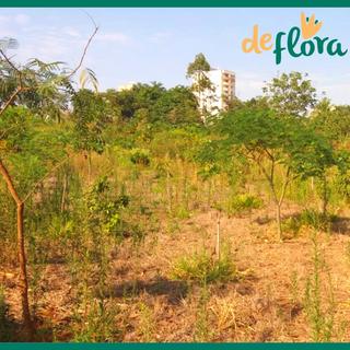 Deflora Reflorestamento (32).png