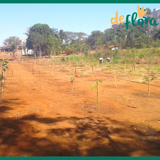 Deflora Reflorestamento (24).png