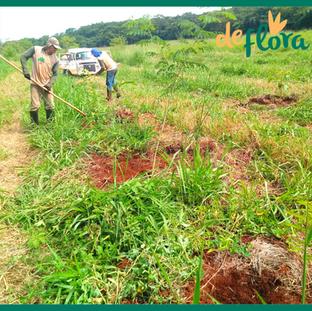 Deflora Reflorestamento (13).png
