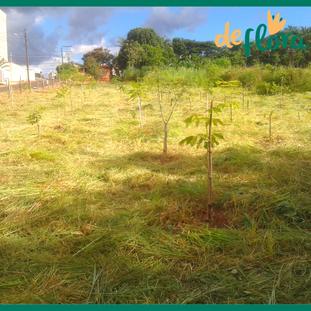 Deflora Reflorestamento (30).png