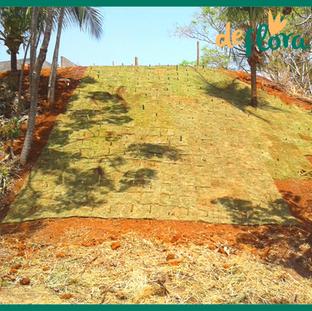 Deflora Reflorestamento (25).png