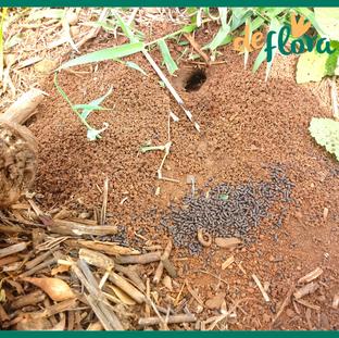 Deflora Reflorestamento (19).png