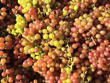 Norfolk Graps
