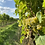 Thumbnail: Picnic for 2 people with wine voucher at Chet Valley Vineyard