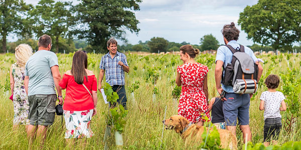 Vineyard tour at Chet Valley Vineyard with Norfolk Winemaker John Hemmant