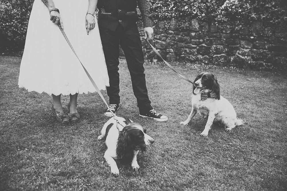 oxwich bay wedding, rockabilly wedding, dogs at weddings,