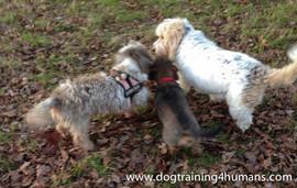 DogSchool (1 of 1)-49.jpg