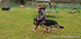 DogSchool (1 of 1)-158.jpg