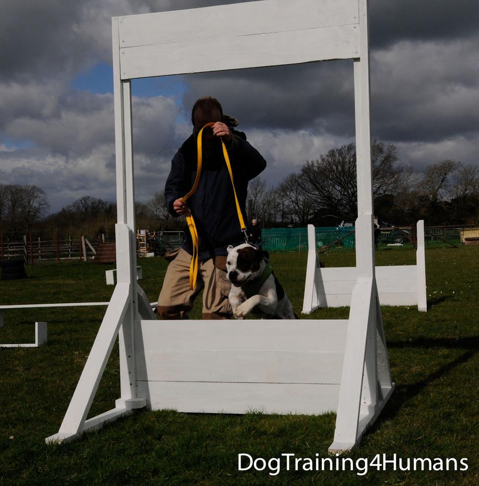 DogSchool (1 of 1)-293.jpg