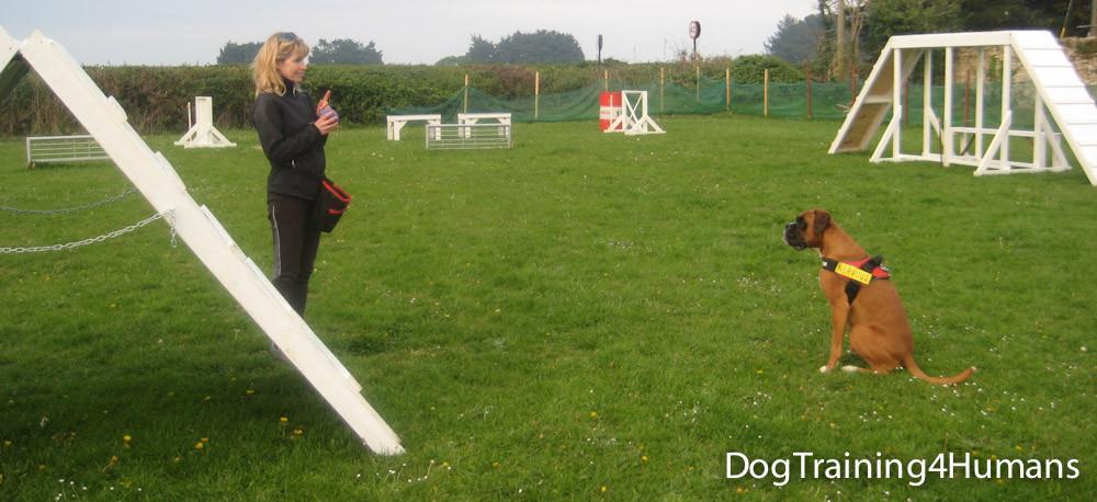 DogSchool (1 of 1)-509.jpg