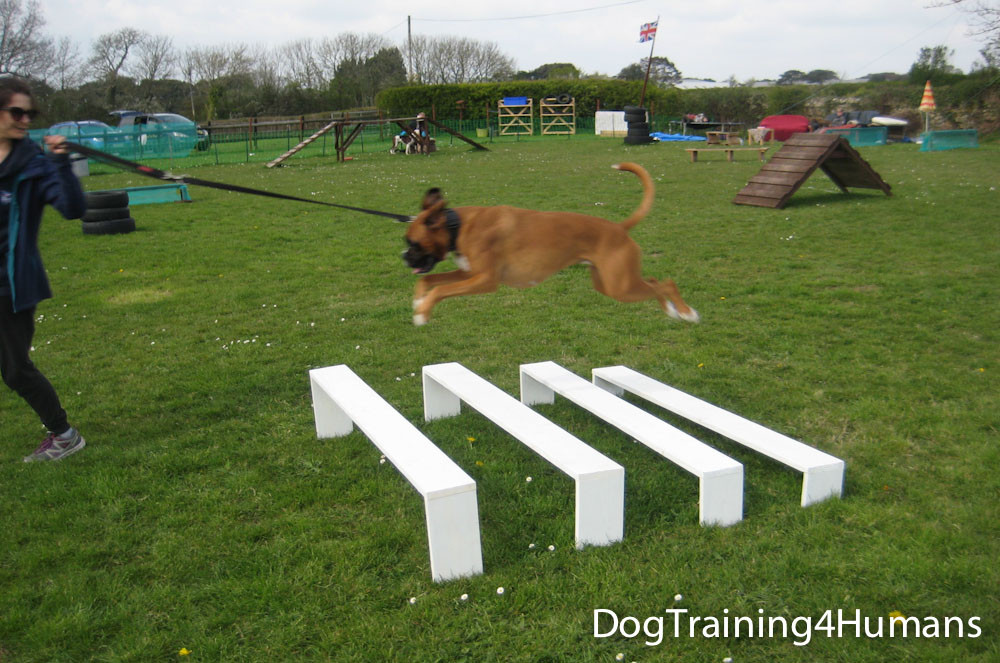 DogSchool (1 of 1)-395.jpg