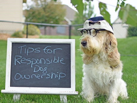 12 Rules for (a dog's) Life - How to become a SPLENDID dog person