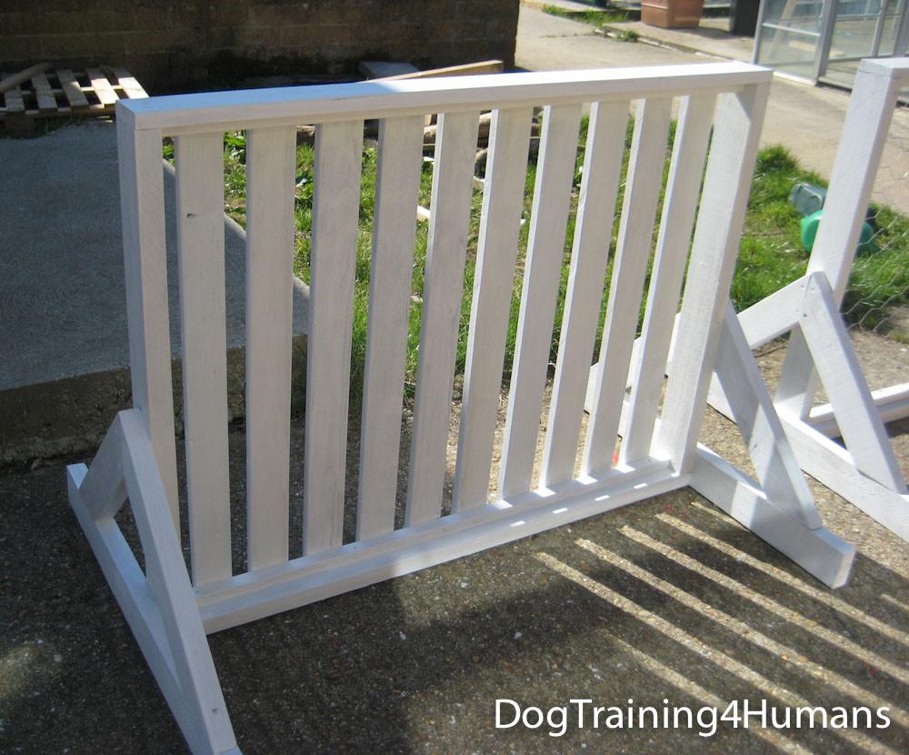 DogSchool (1 of 1)-349.jpg