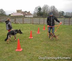 DogSchool (1 of 1)-162.jpg