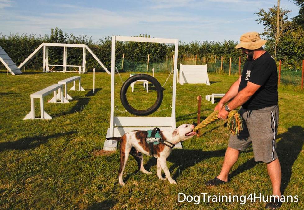 DogSchool (1 of 1)-792.jpg