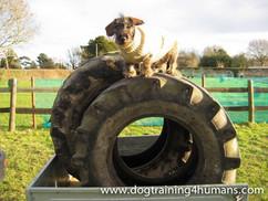 DogSchool (1 of 1)-139.jpg