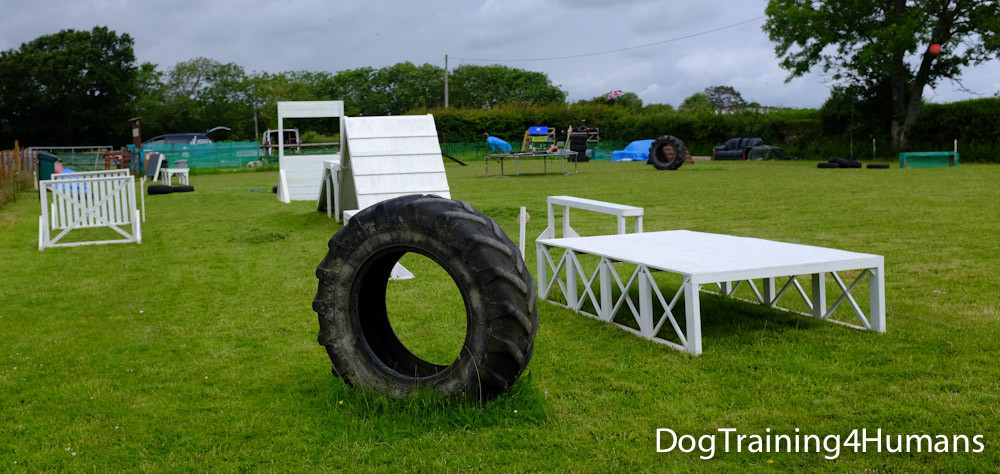 DogSchool (1 of 1)-656.jpg
