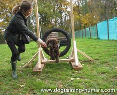 DogSchool (1 of 1)-91.jpg