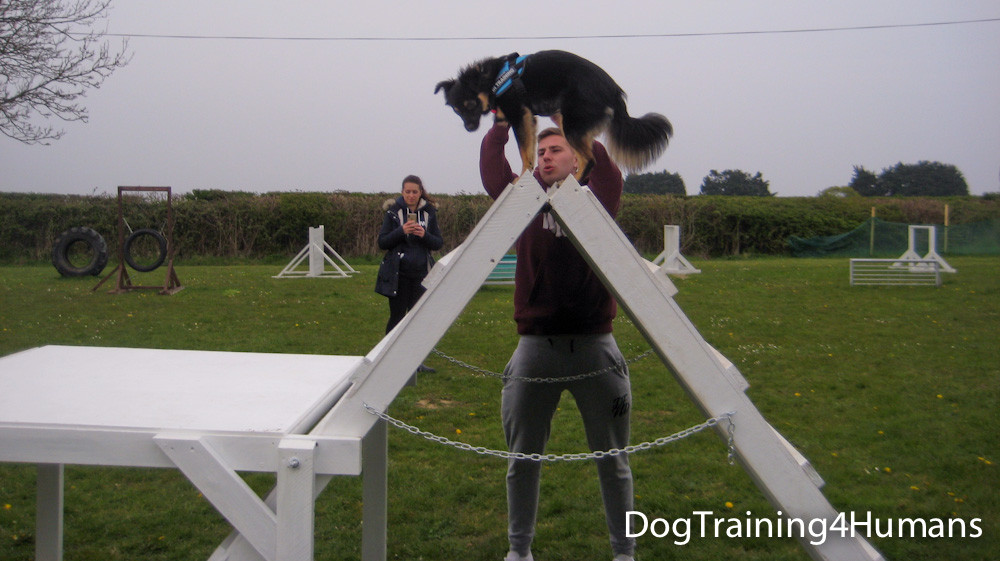 DogSchool (1 of 1)-440.jpg