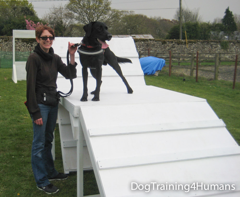 DogSchool (1 of 1)-427.jpg