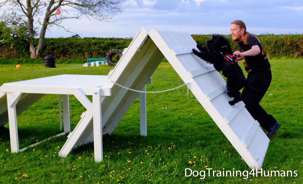 DogSchool (1 of 1)-554.jpg