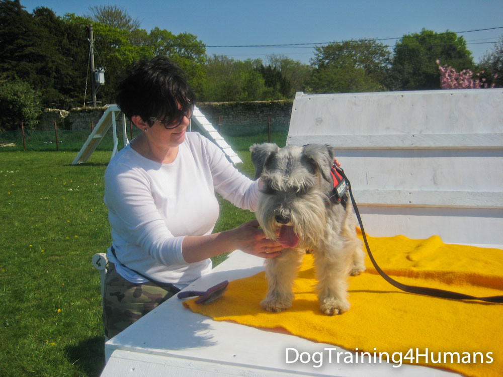 DogSchool (1 of 1)-490.jpg