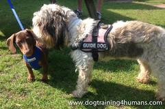 DogSchool (1 of 1)-46.jpg