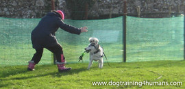 DogSchool (1 of 1)-80.jpg
