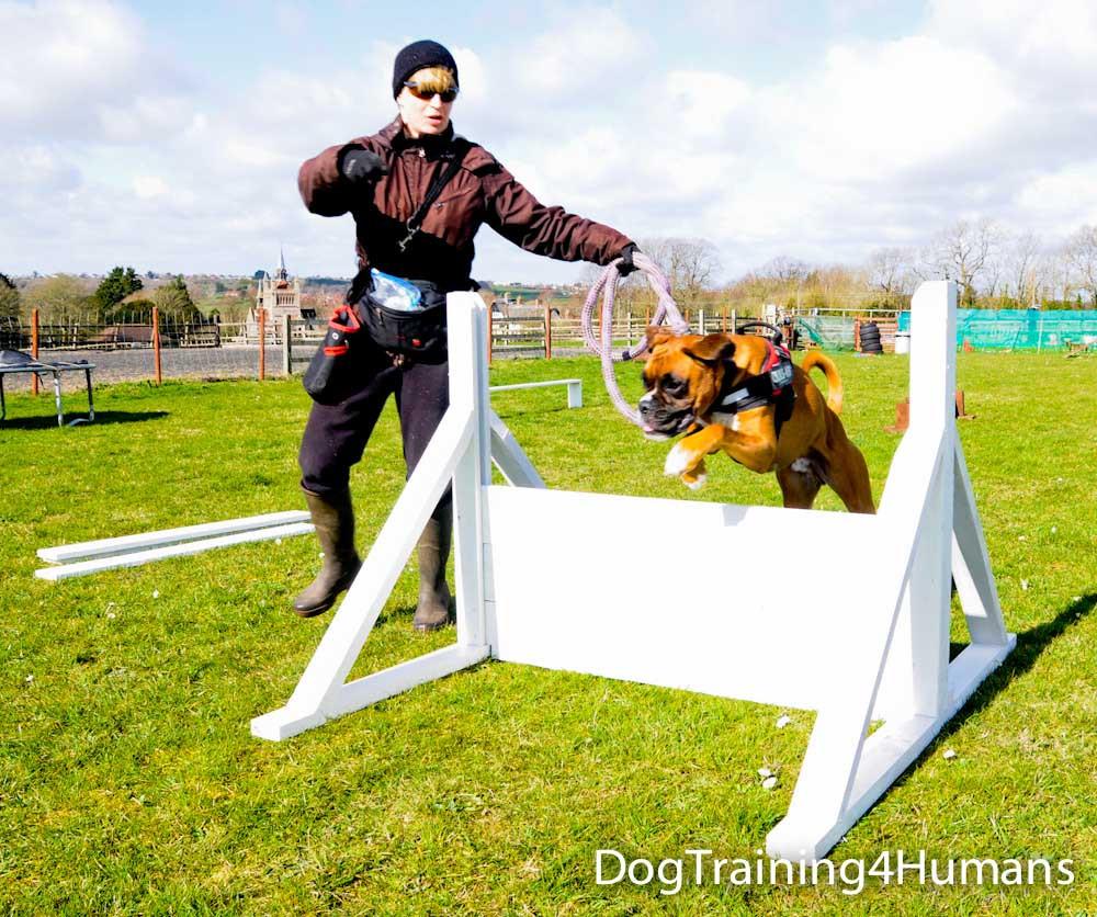 DogSchool (1 of 1)-259.jpg