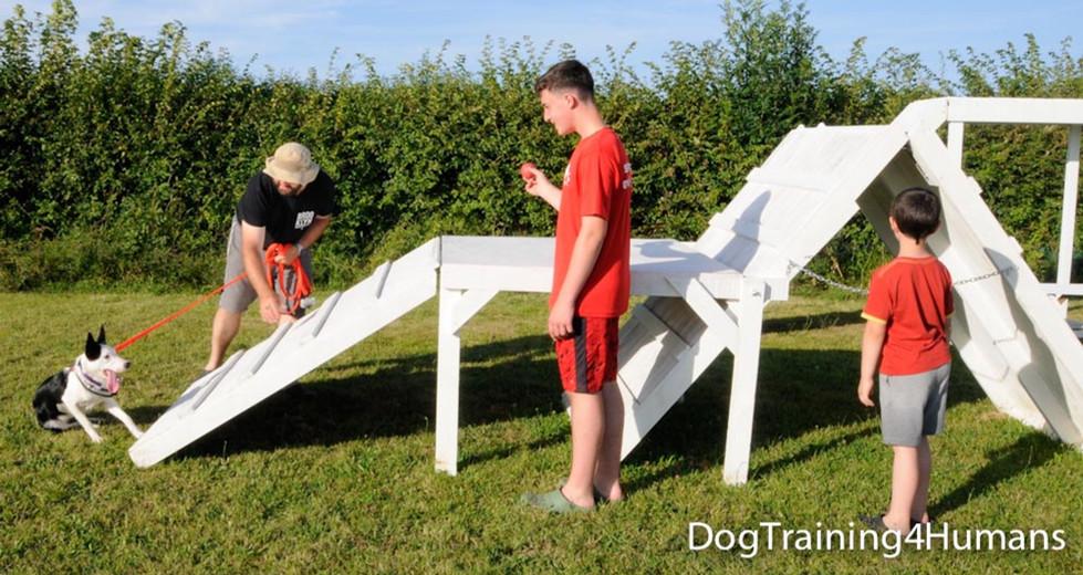 DogSchool (1 of 1)-818.jpg