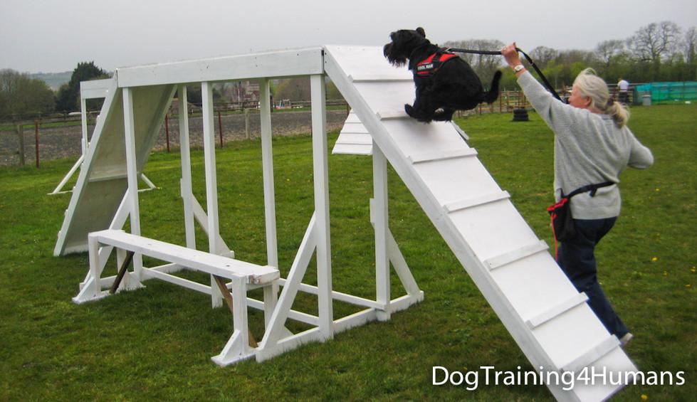 DogSchool (1 of 1)-448.jpg