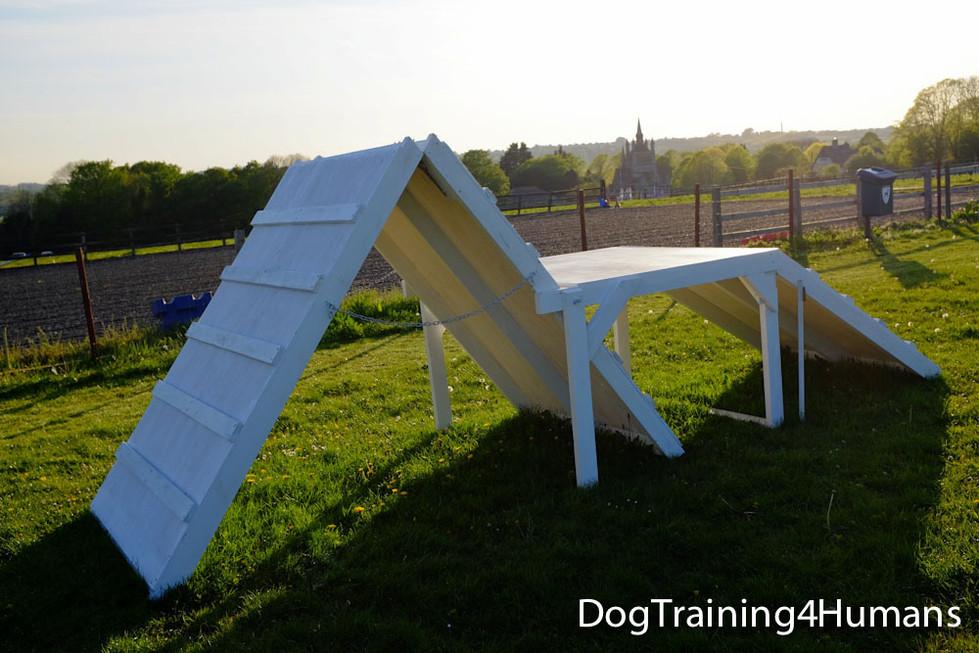 DogSchool (1 of 1)-567.jpg