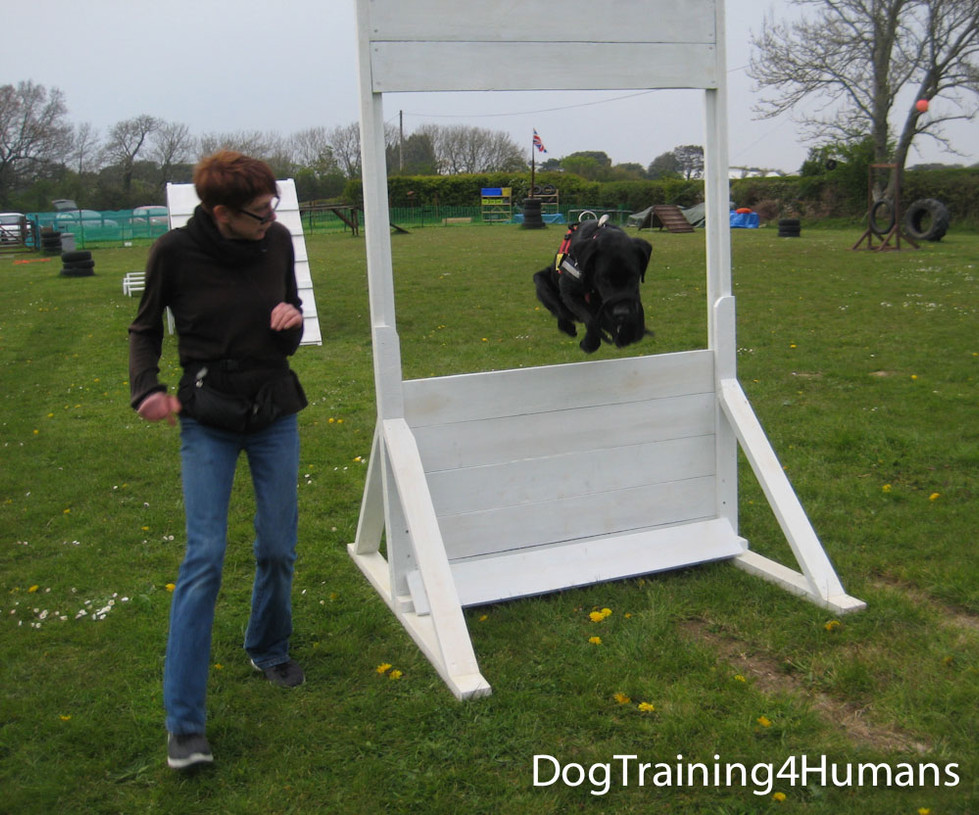 DogSchool (1 of 1)-426.jpg