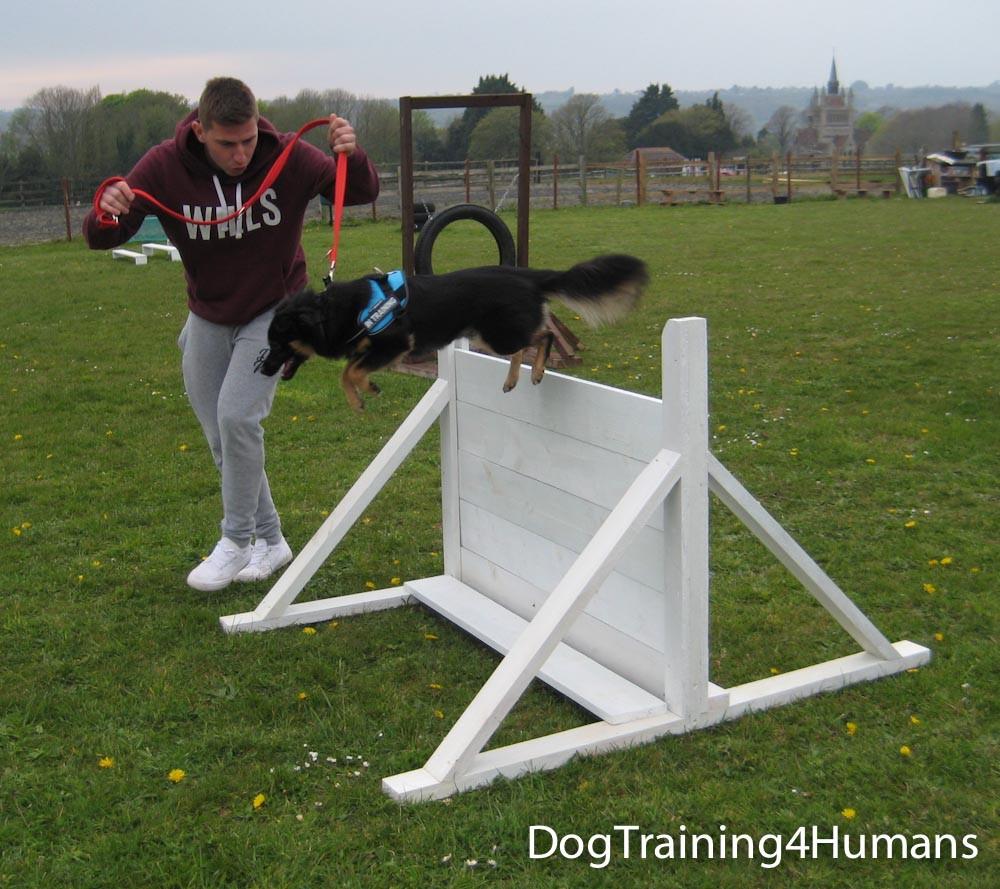 DogSchool (1 of 1)-432.jpg