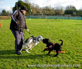 DogSchool (1 of 1)-83.jpg