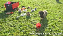 DogSchool (1 of 1)-135.jpg