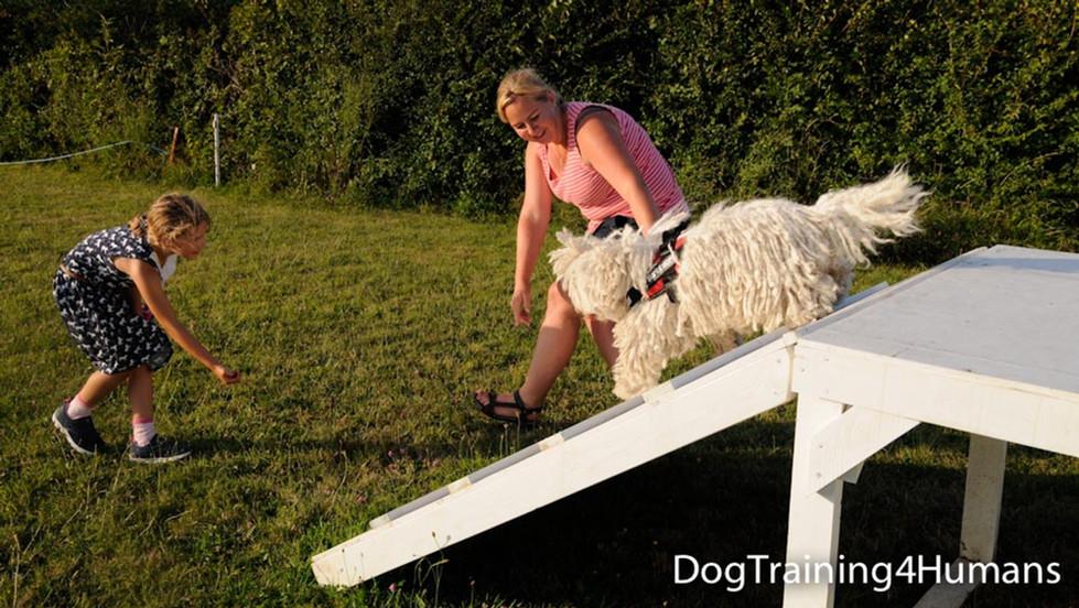 DogSchool (1 of 1)-910.jpg