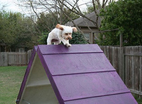 Why we built a badass K-9 obstacle course